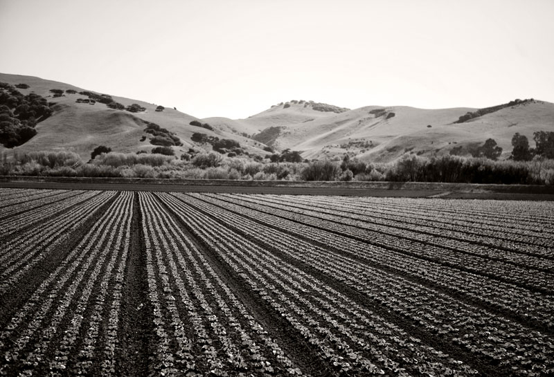 Salinas Fields