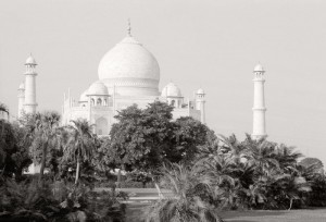 Taj Behind the Trees
