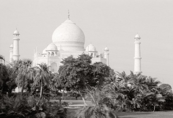Taj Behind the Trees