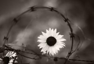 Razored Hope
